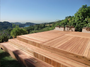 redwood-5